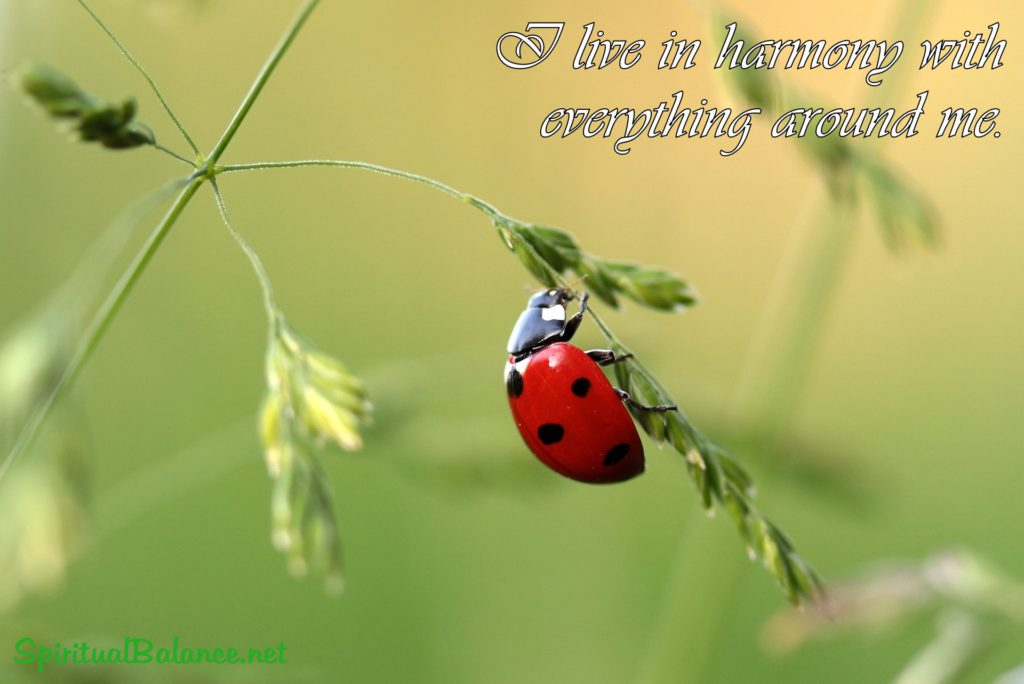 I live in harmony with everything around me. ~ Affirmation for Harmony